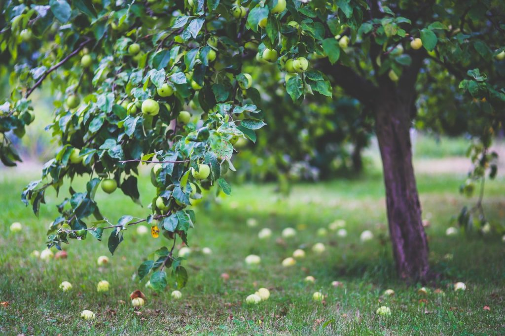 Local apple pressing service can help cut down food waste